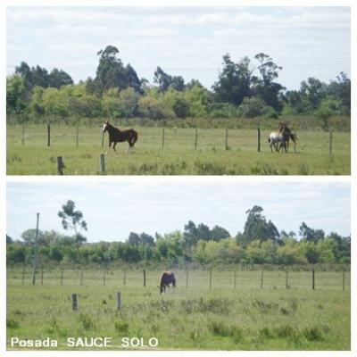 20090126143024-caballos-posada.jpg
